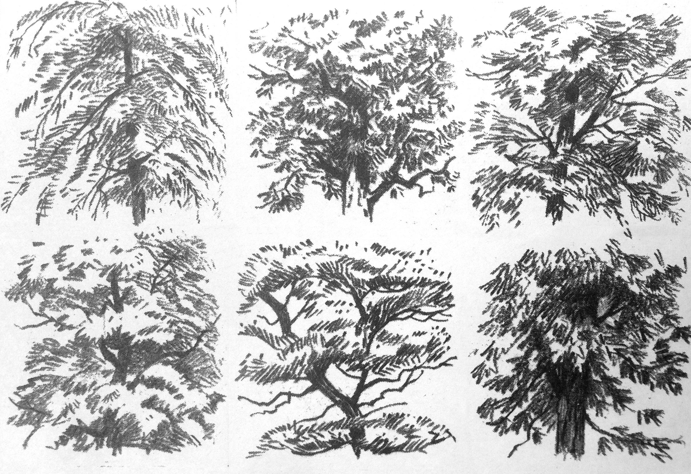 Libros para dibujar rboles an lisis de formas for Tecnicas de representacion arquitectonica pdf